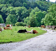 (Very) Rural Scene by Daidalos