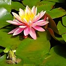 water lily and frog by patrick pichard