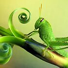 Grasshoppers and katydids by jimmy hoffman