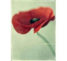 Summer #2 Photographic Print