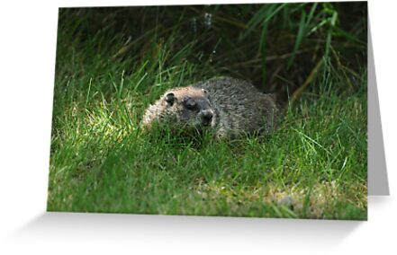 Hello Mr GroundHog by Lynda   McDonald