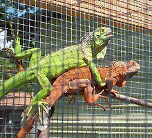 Trogdor & Isador by iguanababe221