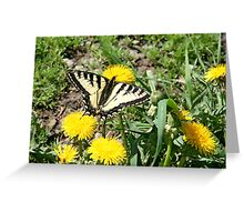 Tiger Swallowtail on Dandelion Flowers Greeting Card