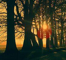 Blazing Trees by blueguitarman