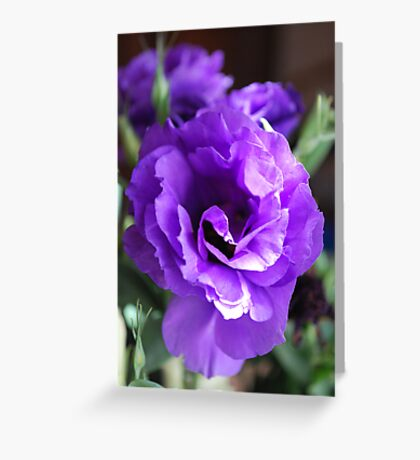 Lithianthus : Mauve in the Morning. Greeting Card