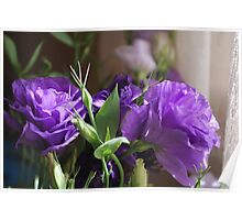 Lithianthus : A   touch of morning joy.  Poster