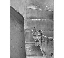 Gringa Photographic Print