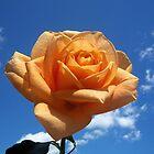 My Peach Love! by Diane Trummer Sullivan