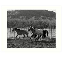 Herd on The Move Art Print