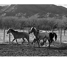 Herd on The Move Photographic Print
