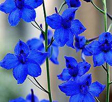 Garden of Blue by Kelly Cavanaugh
