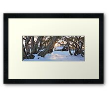 Wallace Hut, Falls Creek, Australia Framed Print