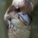 Kookabara by NickBlake