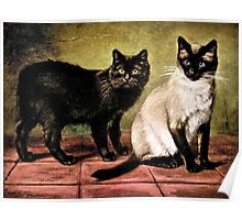 Black Mank and Royal Siamese Cat Poster