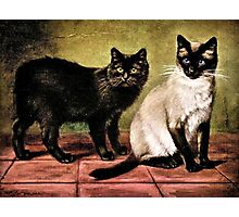 Black Mank and Royal Siamese Cat Photographic Print