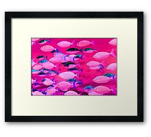 Fishy Business Framed Print