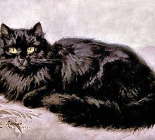 Black Persian Cat by goldenmenagerie