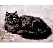 Black Persian Cat Photographic Print