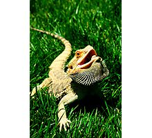 Modern Dragon Photographic Print
