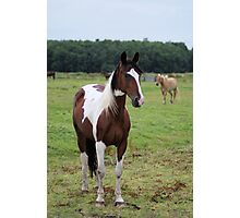 What a perfect horse nice colors Photographic Print