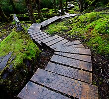 Forest Path by Kana Photography
