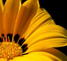 Flower by Kana Photography