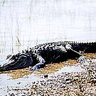 Gator Basking in Delight by Daneann