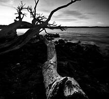Tree by Kana Photography