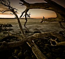 Beach Wood by Kana Photography