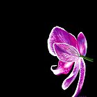 Purple Orchid  by Veronica Helen Art
