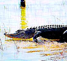 Gator, Mark, Get Set, Goooo!  by Daneann