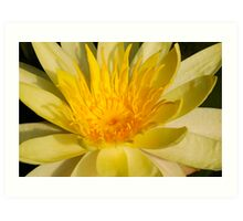 heart of a yellow water lily Art Print