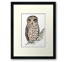 Boobook Owl Framed Print