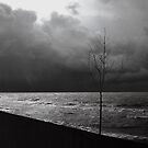 091508-1 by MICKSPIXPHOTOS