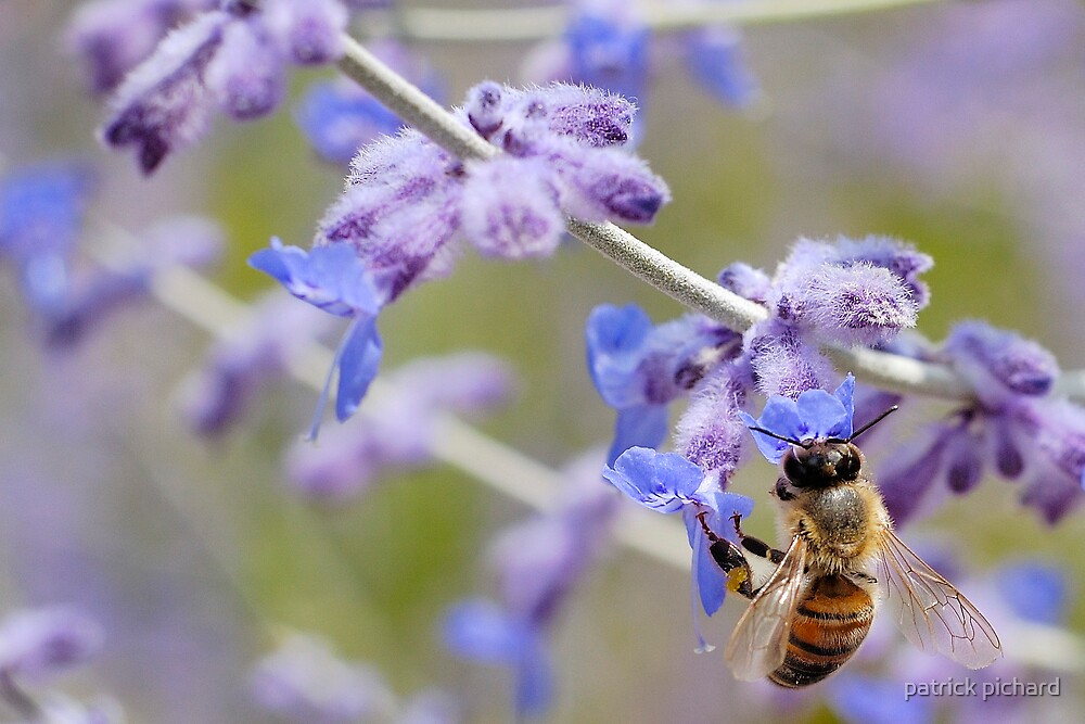 bee and flowers by patrick pichard