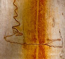 Scribbly Gum Bark by fotoWerner