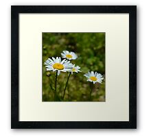 A World of Daisies Framed Print