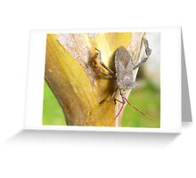 A stink bug sitting on the bark of my Crepe Mrytle tree in San Antonio, Texas Greeting Card
