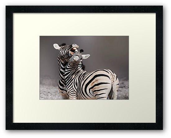 ZEBRA SQUABBLE - NAMIBIA by Michael Sheridan