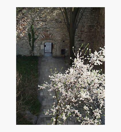 Secret Garden Photographic Print
