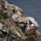 the daredevil by NordicBlackbird