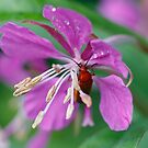 Insect in bloom by Martina Fagan