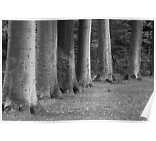 Trees in a Row (<15 min.) Poster
