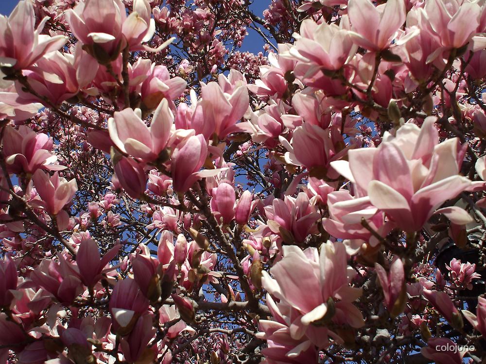 Spring has Sprung by colojuno