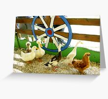 Follow the Chicken Greeting Card