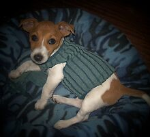 Not puss in boots but dog in sock by Teresa Schultz