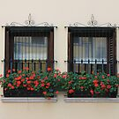 Two nice windows  by annalisa bianchetti