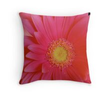 Pink Gerbera Daisy Throw Pillow
