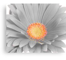 Gerbera Daisy with Yellow Center Canvas Print