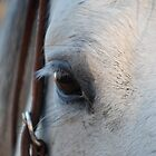 Through the Eye of a Horse by Suz Garten